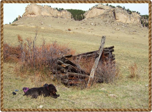 Black Airedale Mariah in the Bighorn Mountains of central Wyoming