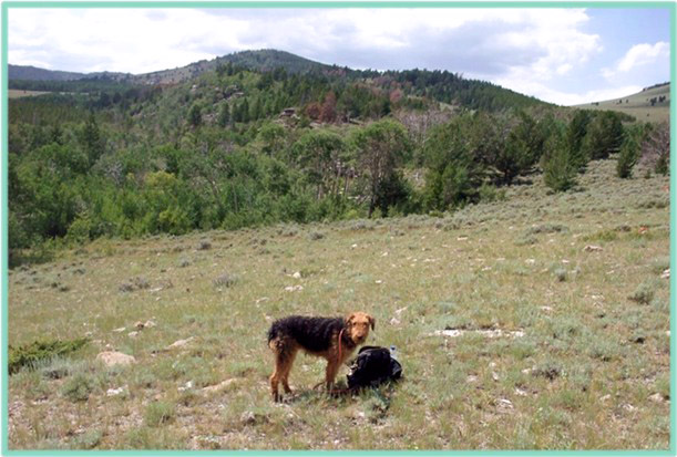 Airedale - Bayer Mountain, Freak Mountains western Wyoming